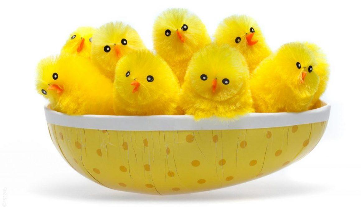 Ett gäng kycklingar samlades i ett påskägg.